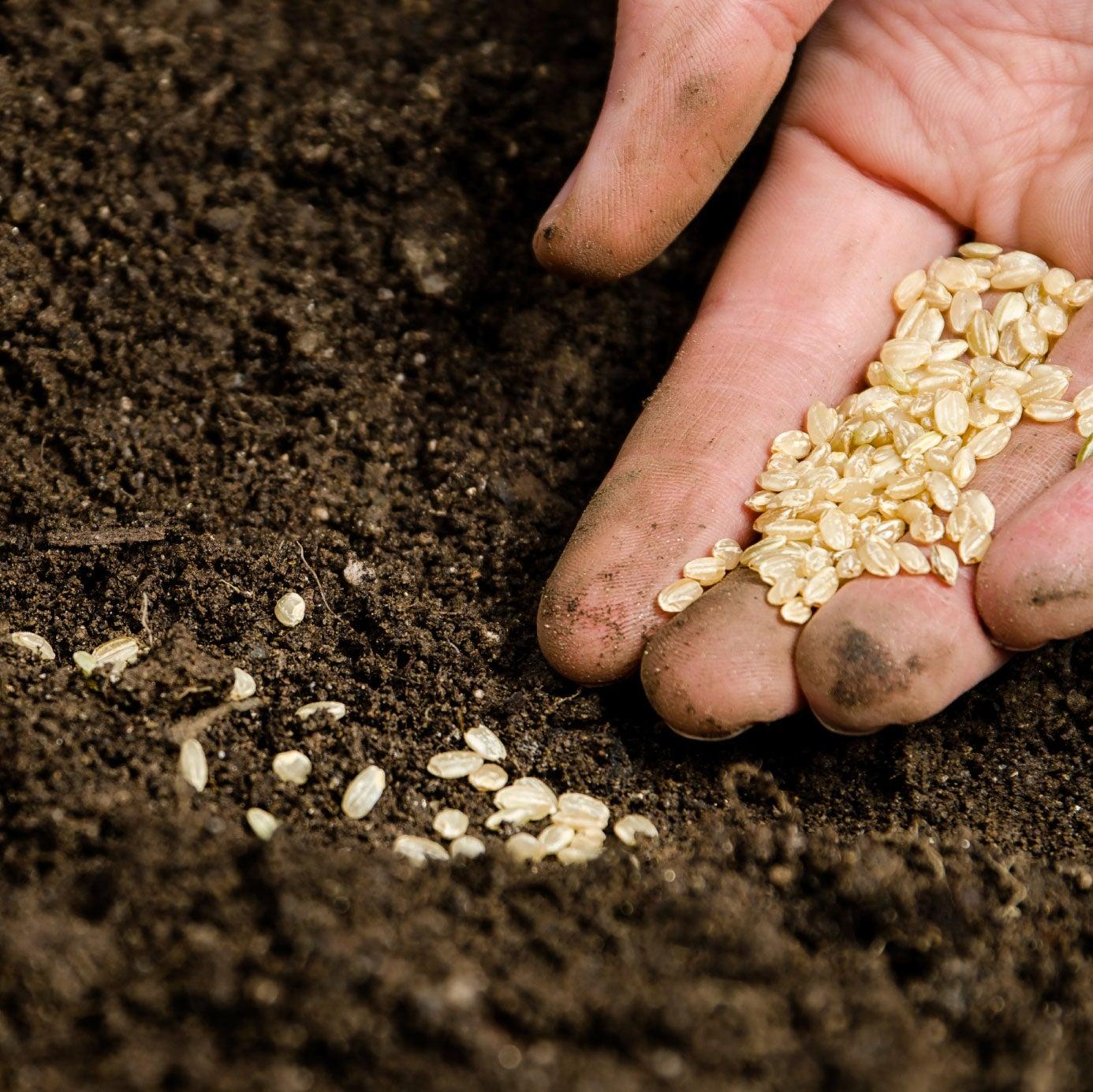 Gardening: Gardening Seeds
