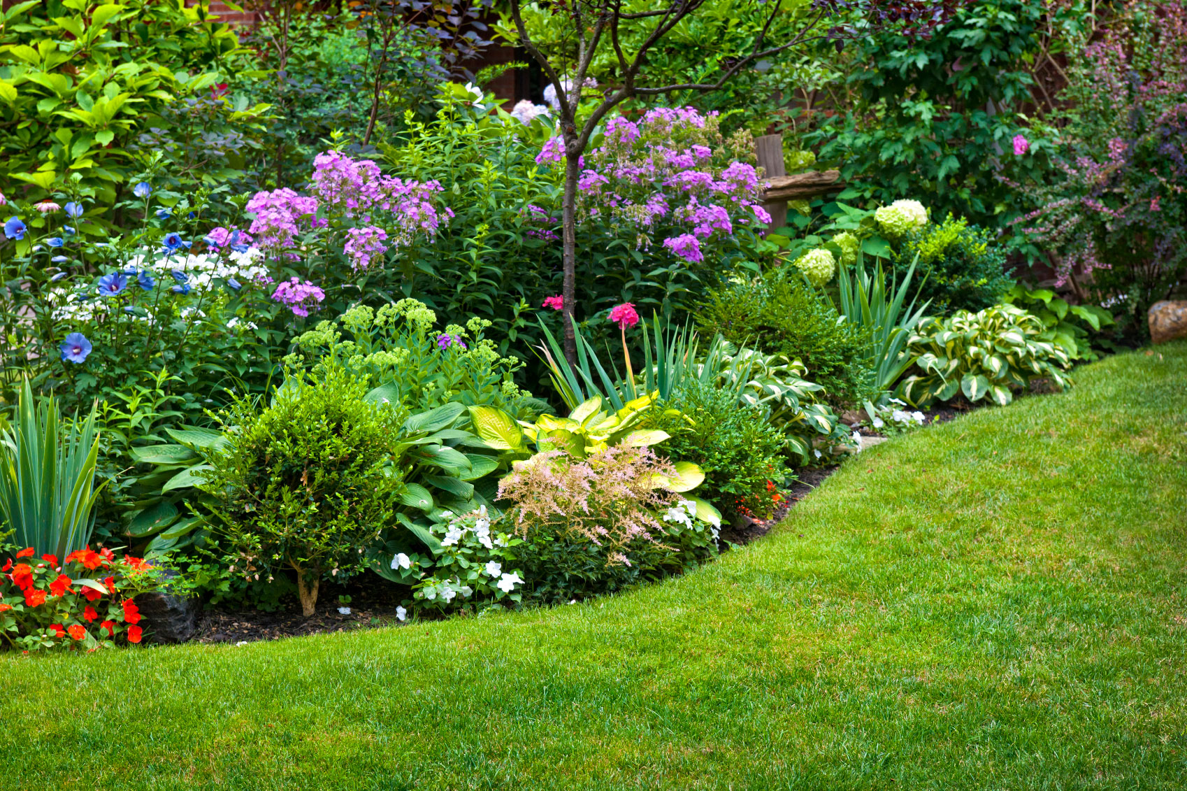 Perennial plant information what is definition of for Weeds garden maintenance