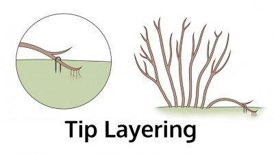 tip-layering