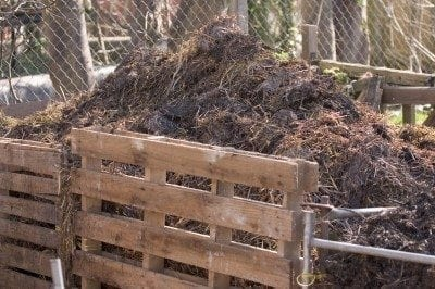 Gardening with compost: how compost helps plants and soil
