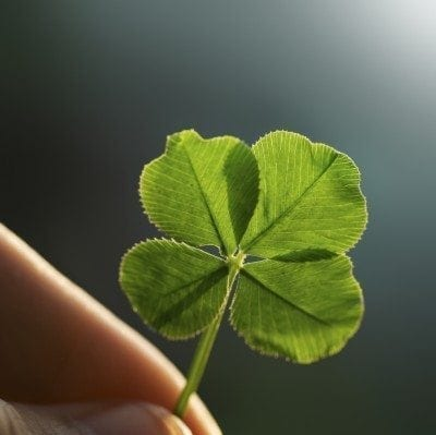 What causes four leaf clovers and how to find a four leaf clover