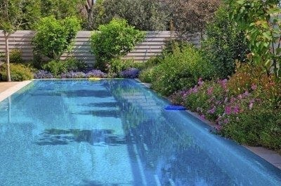 Poolside plant info: tips for planting around pools