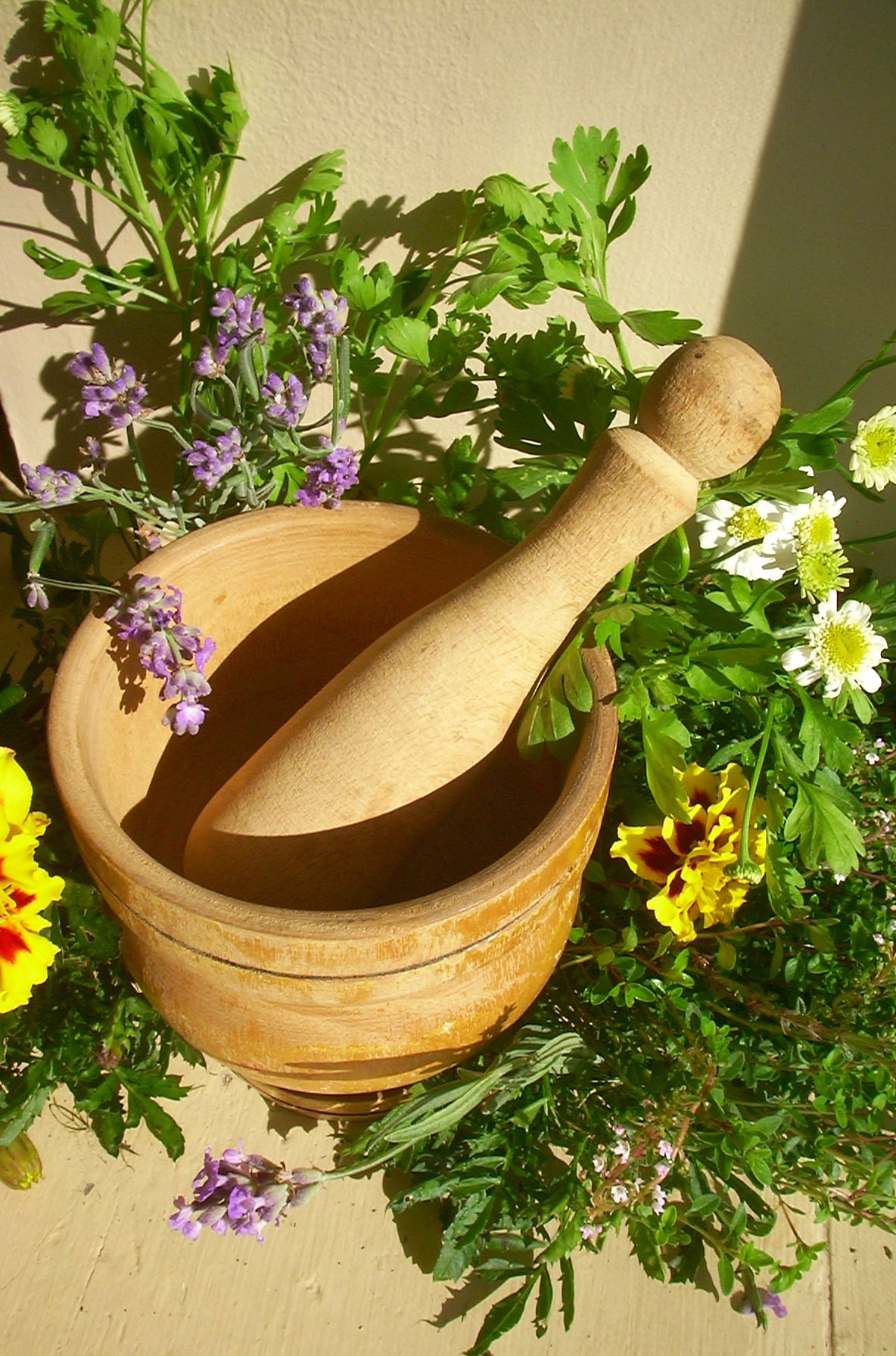 Medicinal Plant Garden - Tips On Growing Medicinal Herbs