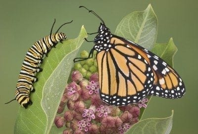 How To Raise Butterflies Teaching Kids About Caterpillars And