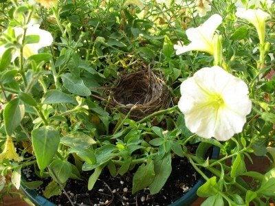 bird-nest-hanging-basket