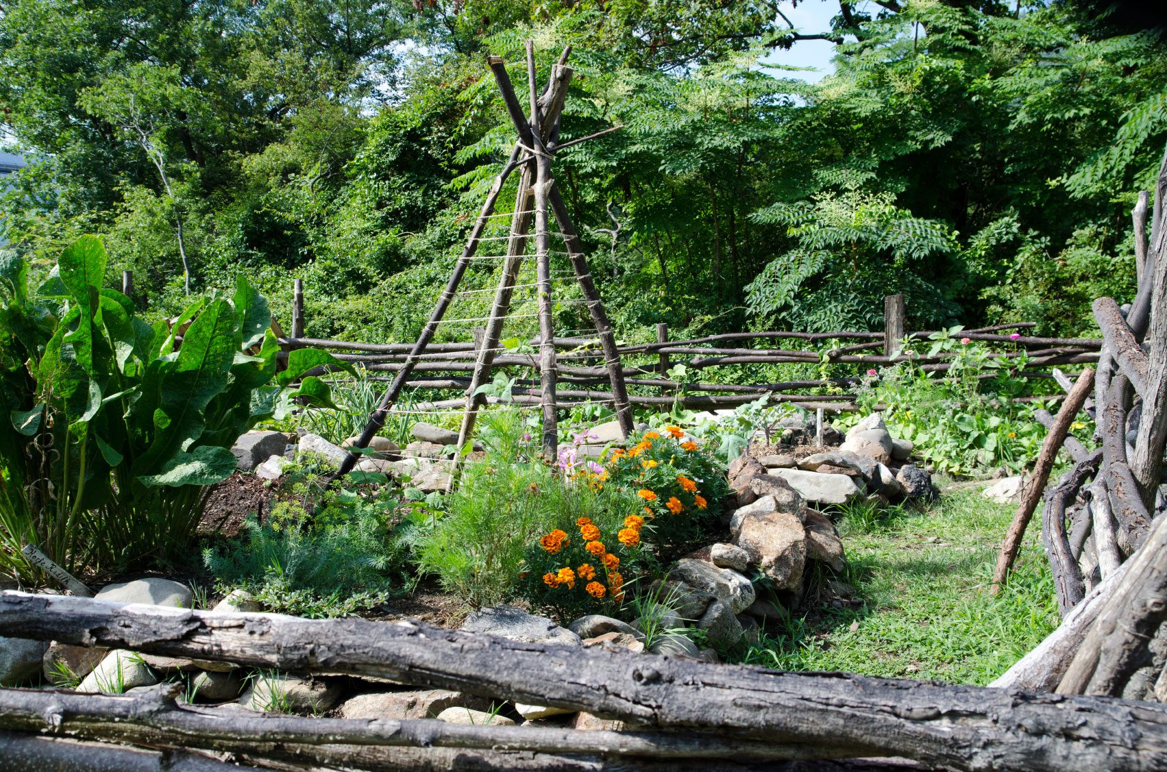 best bamboo cane pole stake all decor ideas for fences.htm teepee plant support how to make a teepee trellis for veggies  how to make a teepee trellis for veggies
