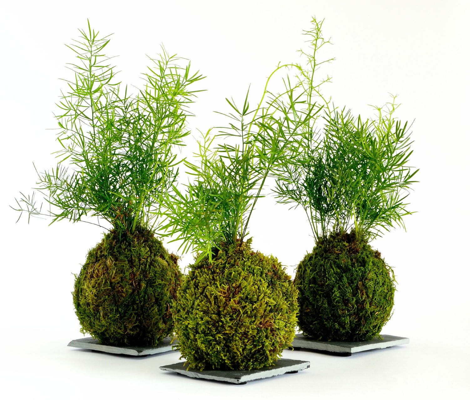 How To Make A Japanese Moss Ball