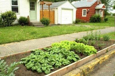 urban-garden-protection
