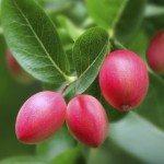 carissa plum