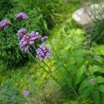 leggy flowers