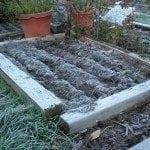 onion frost