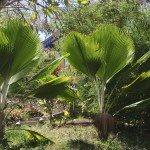 Garten auf Grenada