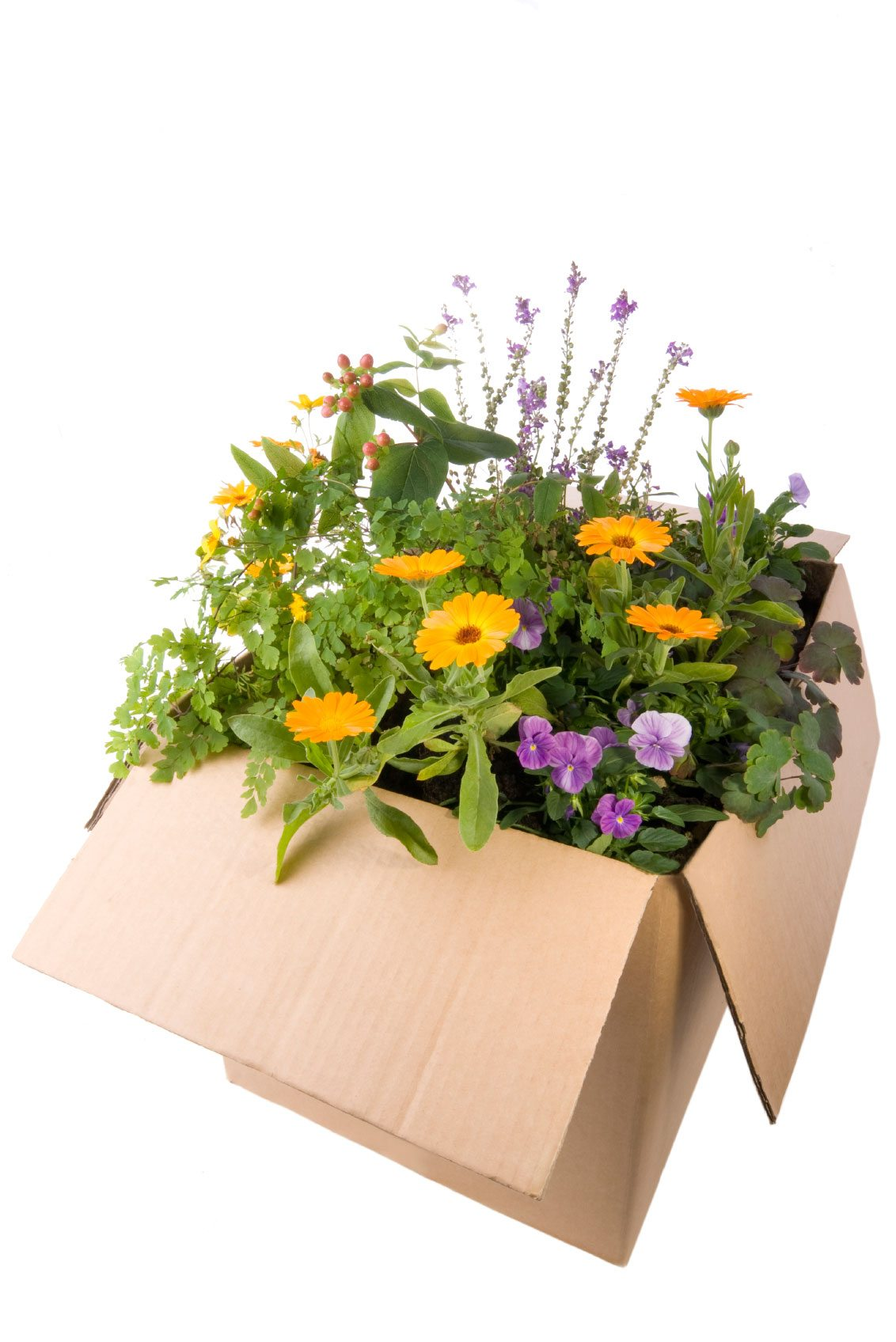 Mailing Garden Plants - Tips On Sending Plants Through Mail