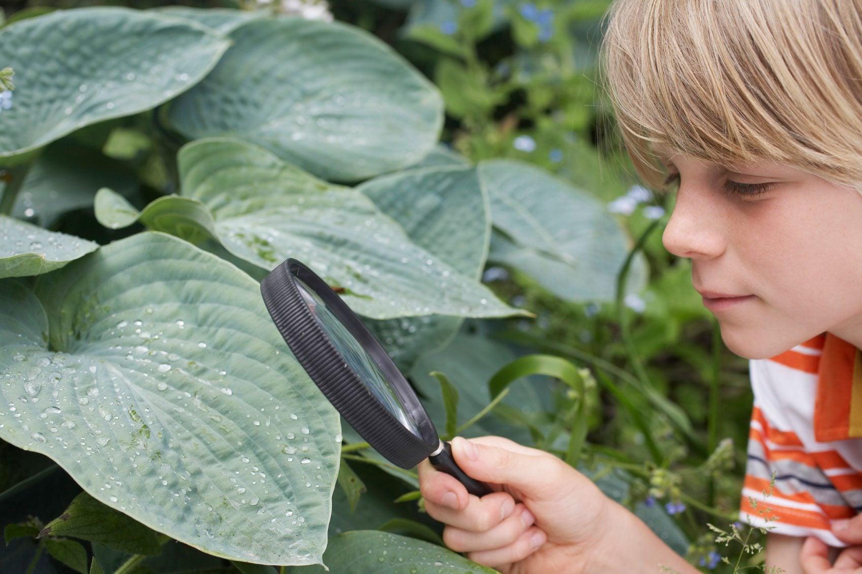 Scientific Gardening Activities - Using Gardens To Teach ...