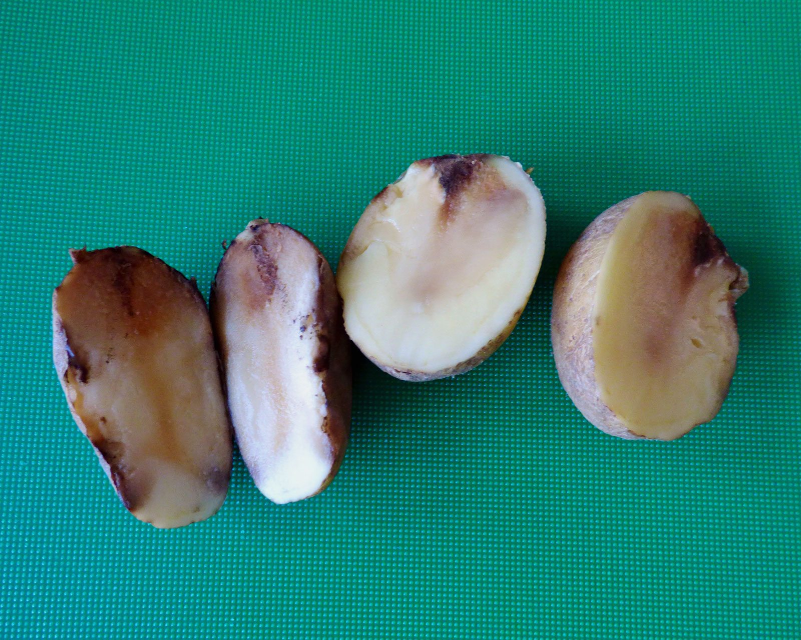 Potato Soft Rot Disease How To Treat Soft Rot In Potatoes