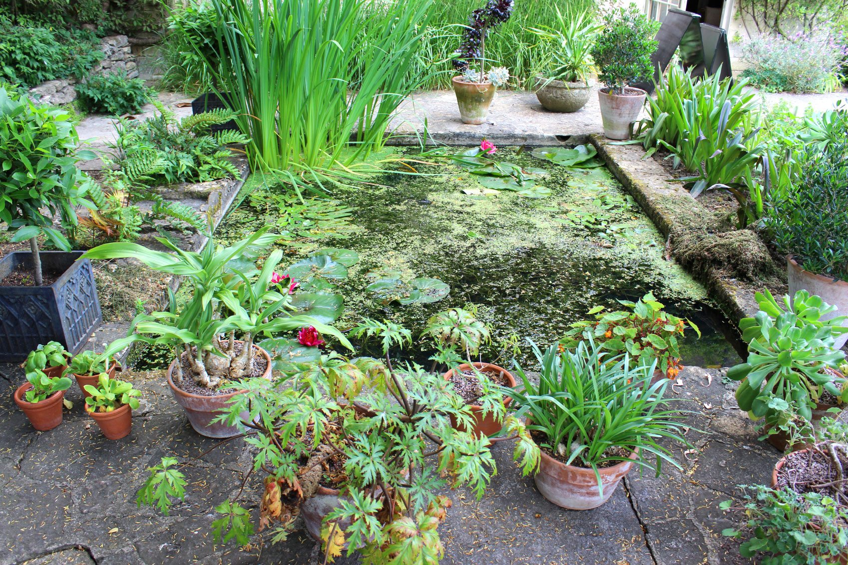 Moisture Loving Plants For Wet Areas Learn About Water