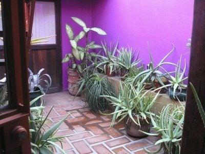 Indoor atrium garden: what plants do well in an atrium