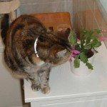 christmas cactus cat