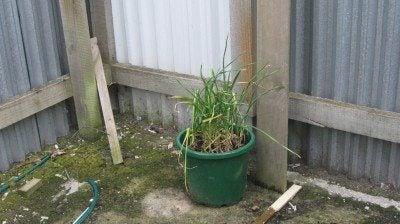 container garlic