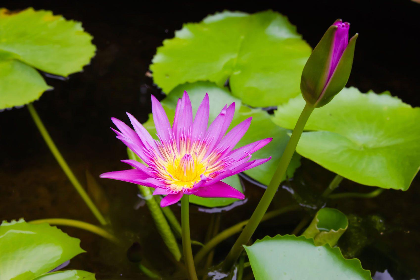 wetland plant info