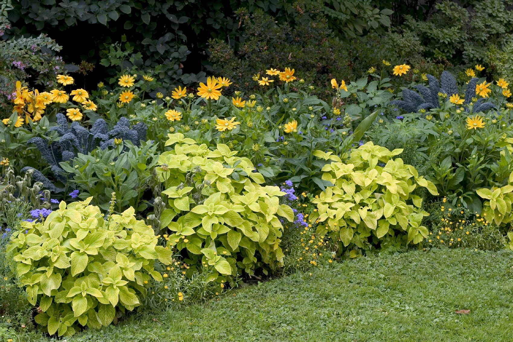 Full sun perennial garden ideas photograph mesophytic plan for Low maintenance full sun flowers
