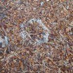 mulch fungus