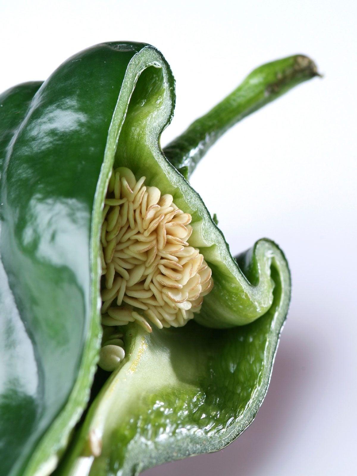 Pepper Seeds Information