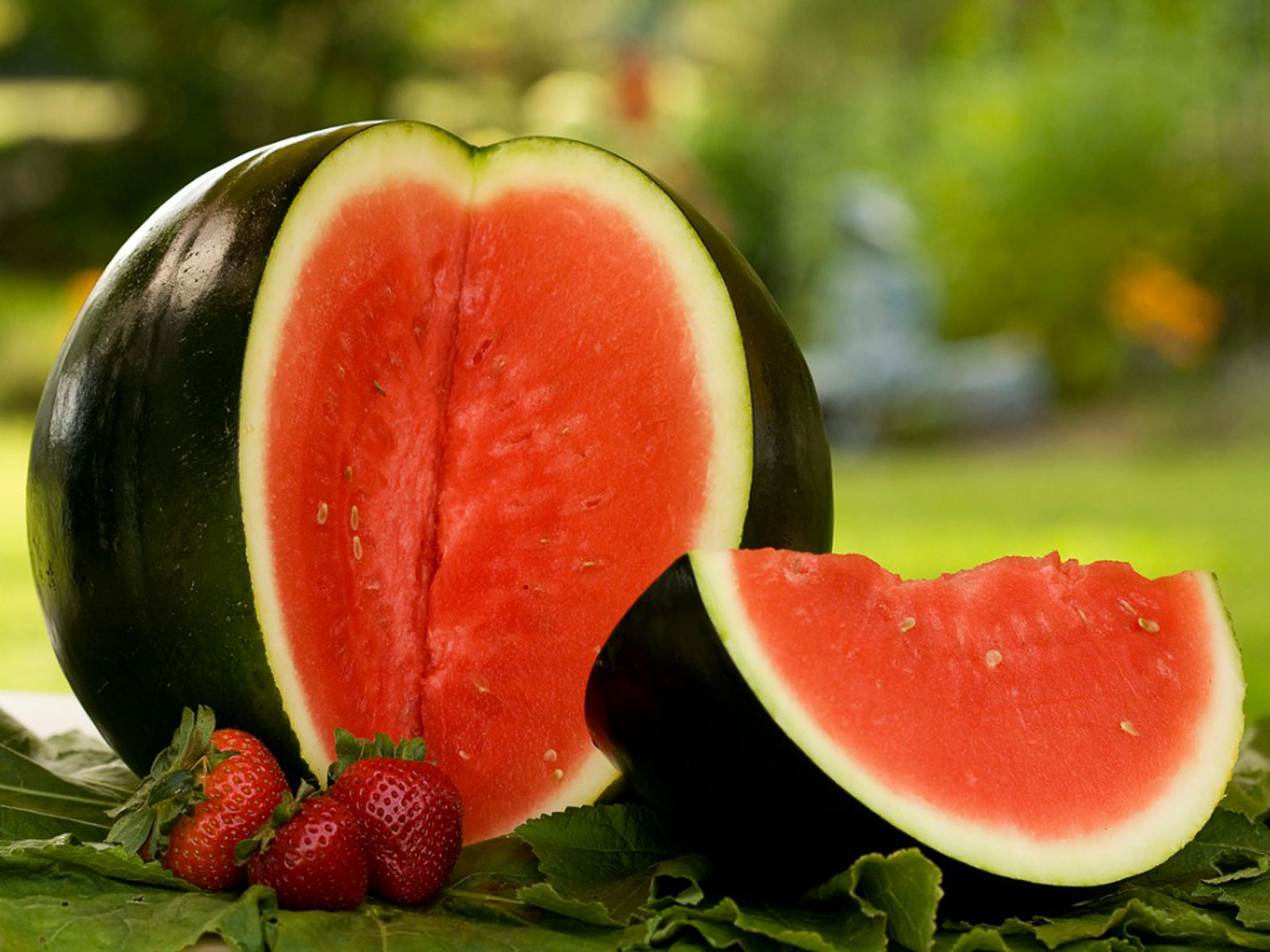 Tips On Sugar Baby Watermelon Care