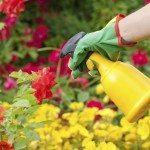 Watering roses