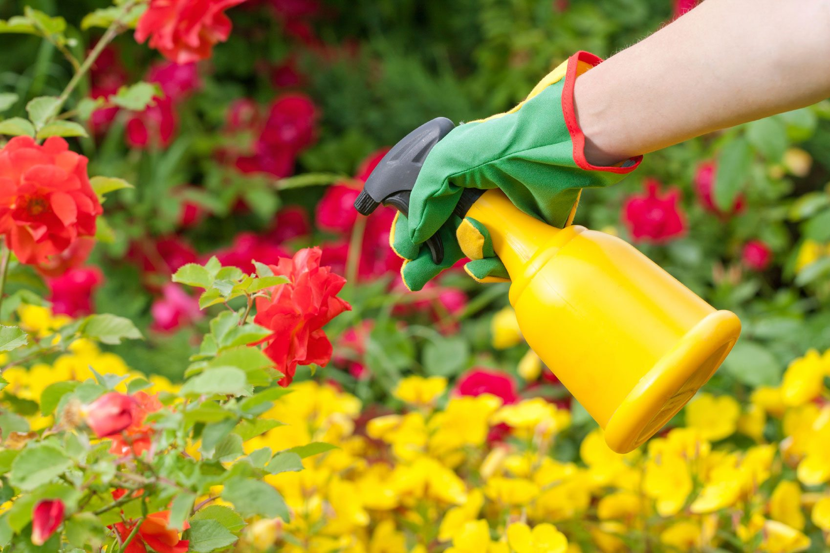 Pesticide application timing when is the best time to for Garden pesticides