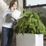 Mid-Adult Woman Watering Houseplant