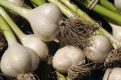 Different types of garlic: garlic varieties to grow in the garden