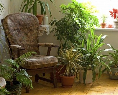 Air purifying houseplants: common houseplants that purify air