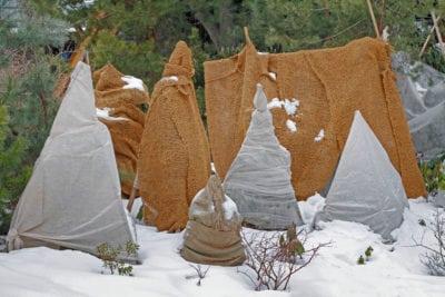 Shrub Winter Protection Garden Design Ideas