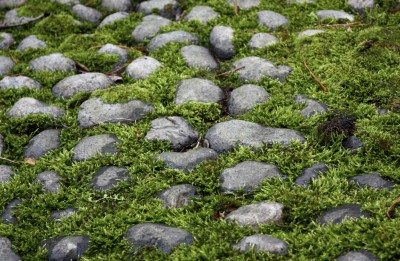 Alternatives to grass: learn about lawn alternatives in cold climates
