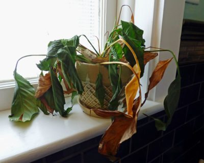 Dying Container Plants Why A Plant May Suddenly Die