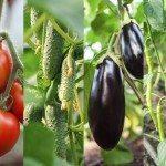 eggplant companions