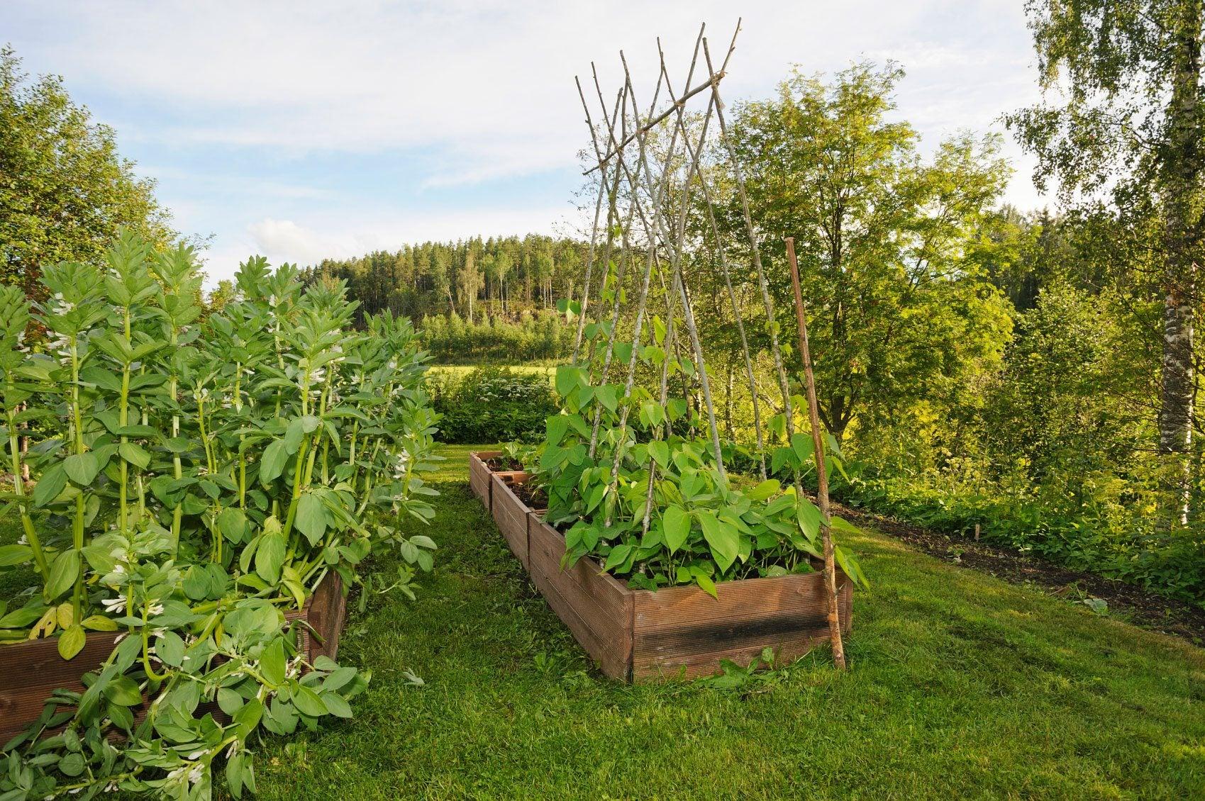 Mittleider Grow Box Using The Mittleider System Of Gardening