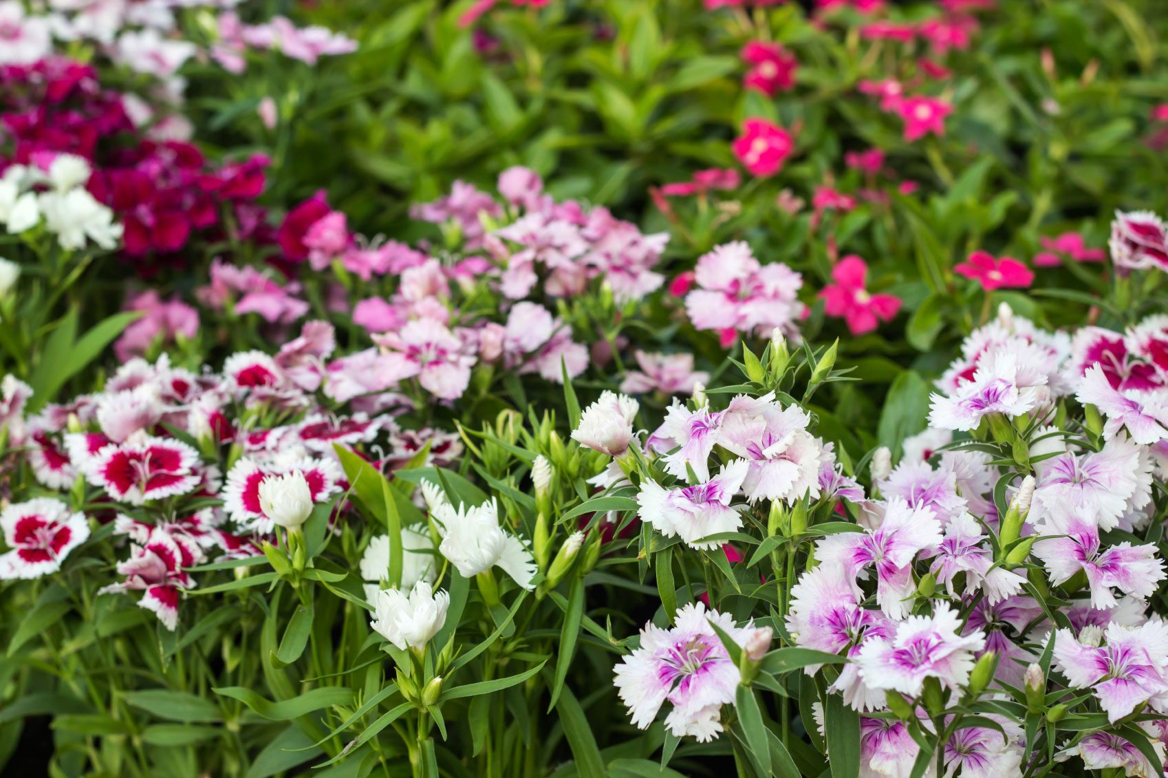 Controlling Plants That Reseed Learn About Self Seeding Plants