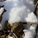 Kiwi under the snow