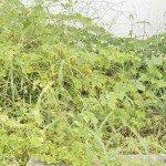 overgrown garden 1