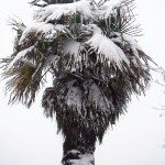 palm tree winter