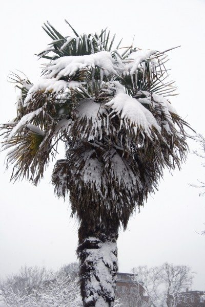 palm tree winter