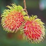 Fresh rambutan from orchard on the eastern part Thailand