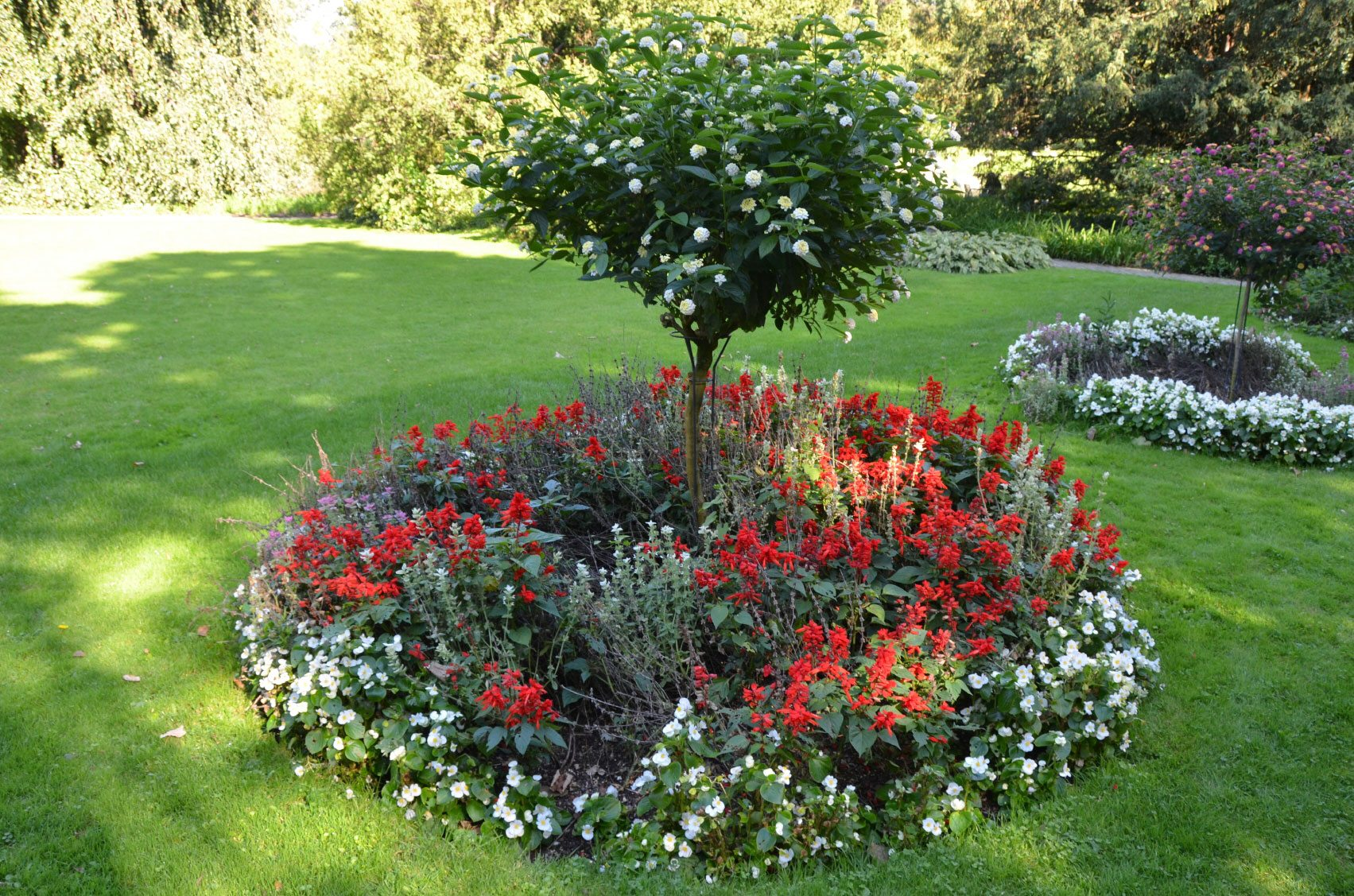 What Is A Ring Garden: Learn About Shrub And Tree Island Beds