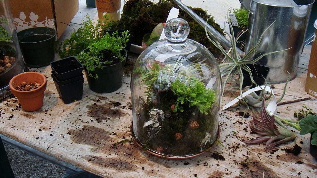 terrarium ideas and supplies tips on building a terrarium