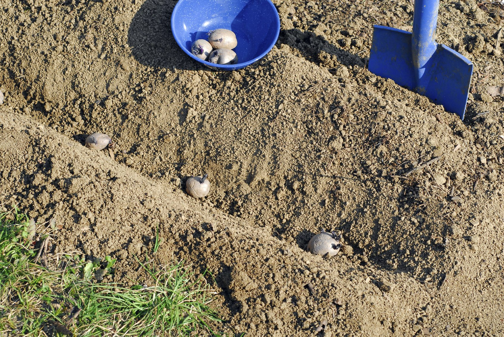 Potato Seed Bed Preparation - Tips For Preparing A Potato Bed