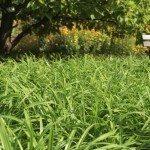 Botanical grdens