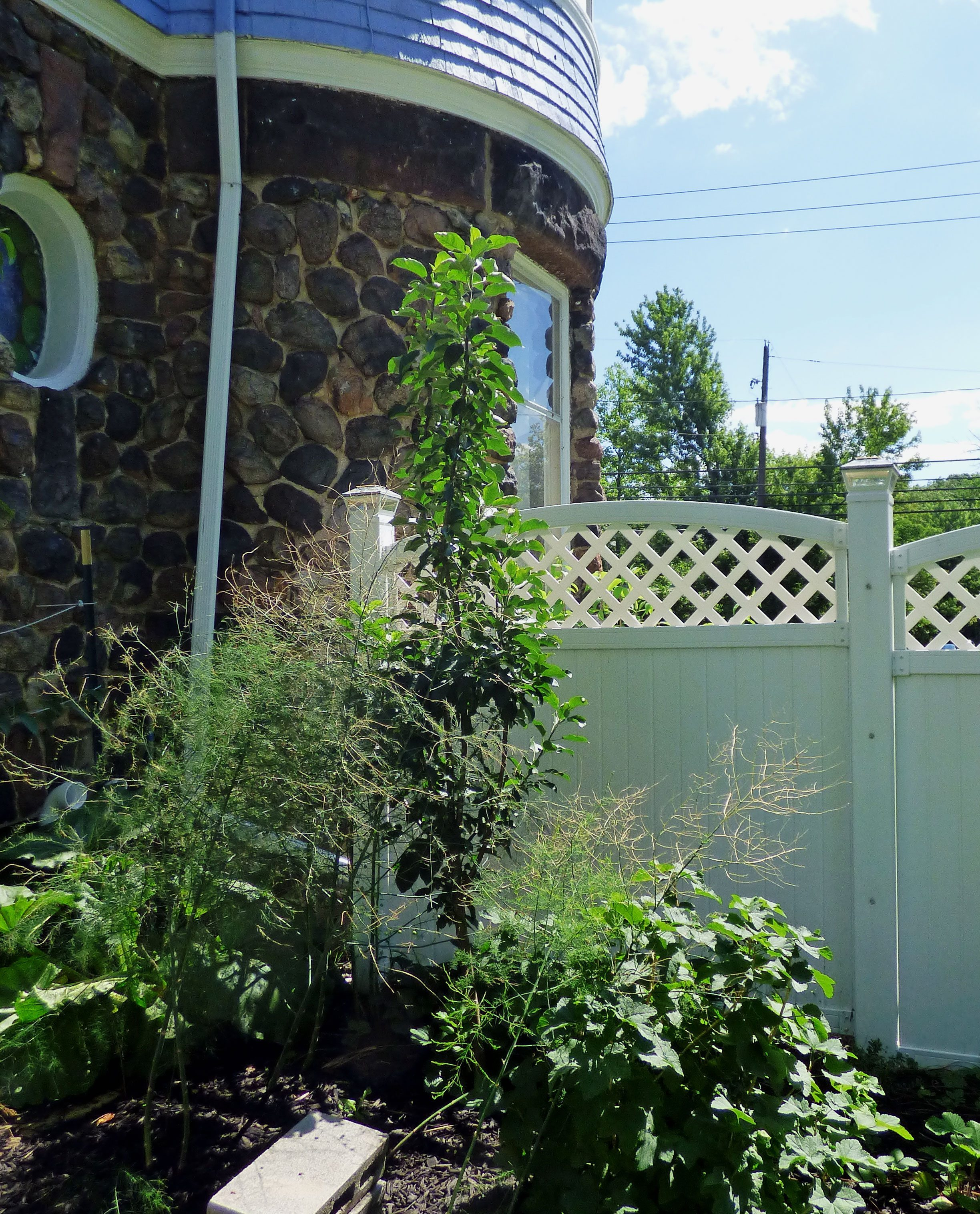 Ten Top Tips For Small Shady Urban Gardens: What Are Columnar Fruit Trees