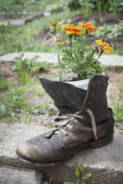 Old shoe used in garden design